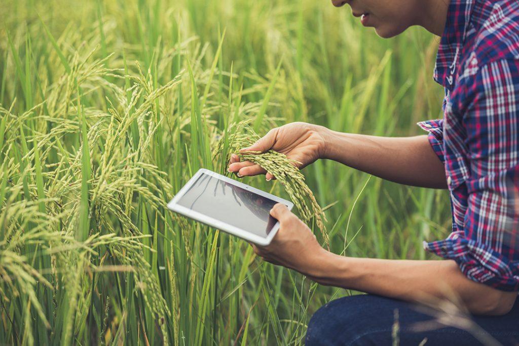 Foto de um profissional analisando uma planta com a ajuda de um tablet