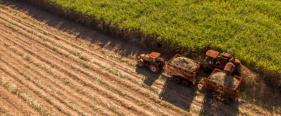 Imagem de capa - Como a Veeam possibilitou que a Euralis acelerasse a expansão global do seu agronegócio